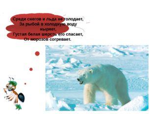 Среди снегов и льда не голодает, За рыбой в холодную воду ныряет, Густая бел