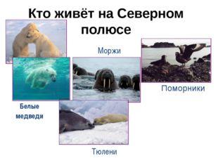 Кто живёт на Северном полюсе Поморники Тюлени Моржи Белые медведи