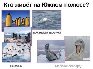 Кто живёт на Южном полюсе? Морской леопард Королевский альбатрос Пингвины