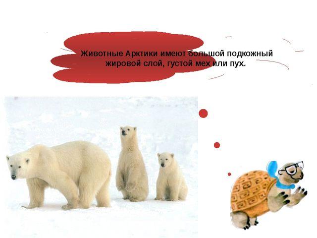 Животные Арктики имеют большой подкожный жировой слой, густой мех или пух.