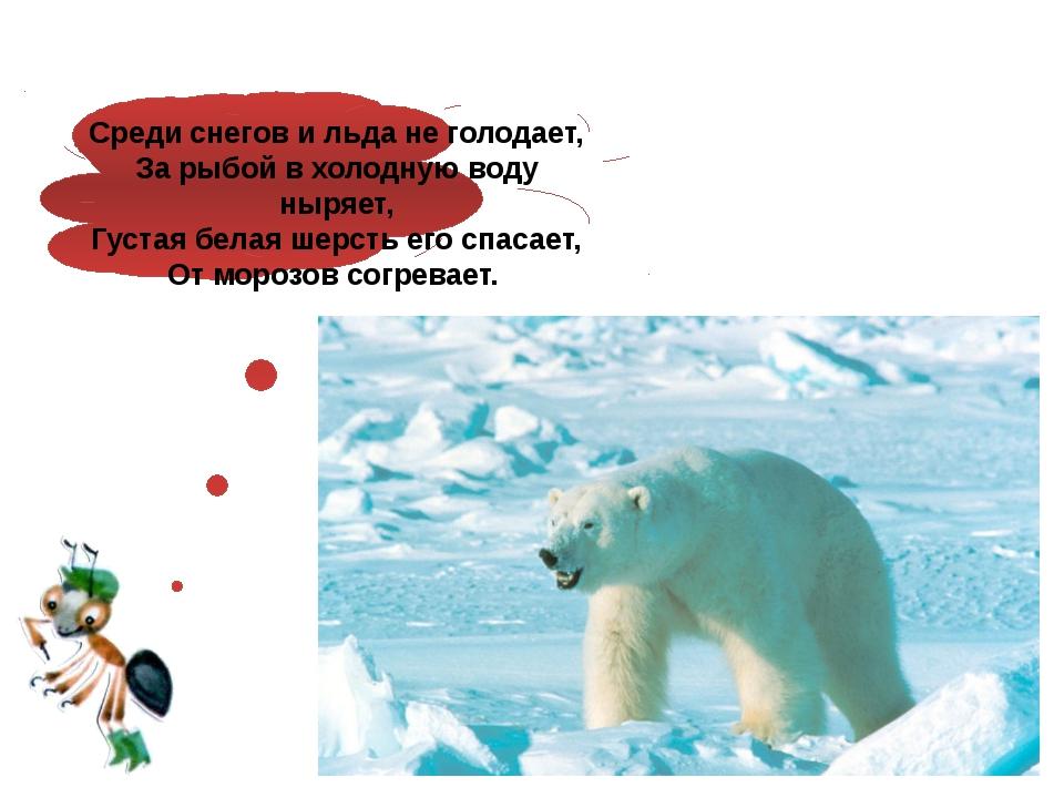 Среди снегов и льда не голодает, За рыбой в холодную воду ныряет, Густая бел...