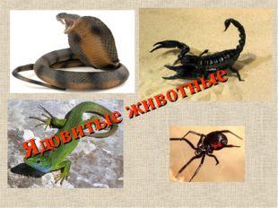 Ядовитые животные