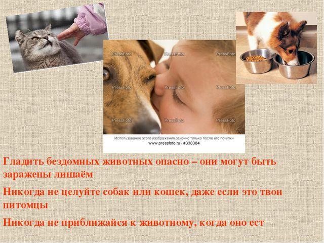 Гладить бездомных животных опасно – они могут быть заражены лишаём Никогда не...