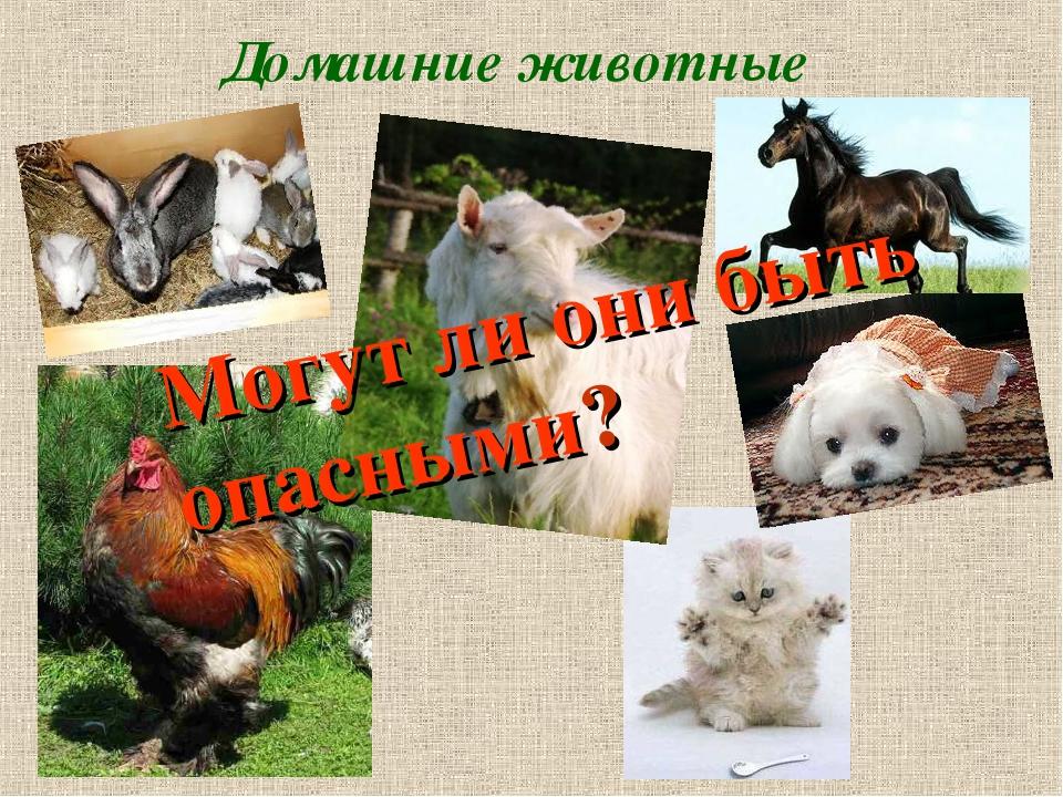Домашние животные Могут ли они быть опасными?
