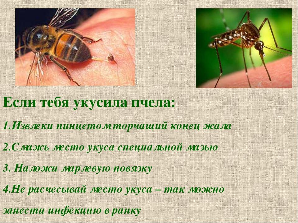 Если тебя укусила пчела: 1.Извлеки пинцетом торчащий конец жала 2.Смажь место...