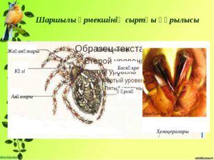 Шаршылы өрмекшінің сыртқы құрылысы Баскөкрек Құрсақ Аяқтары Көзі Жақаяқтары Х