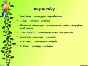 терминдер Баскөкірек - головогрудь - cephalothorax Құрсақ - брюшко - abdomen