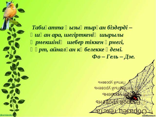Табиғатта қызықтырған біздерді – Ұшқан ара, шегірткенің шырылы Өрмекшінің ше...