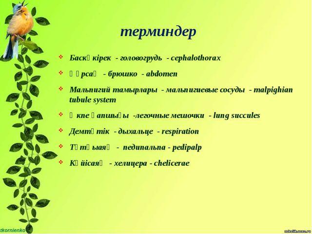 терминдер Баскөкірек - головогрудь - cephalothorax Құрсақ - брюшко - abdomen...