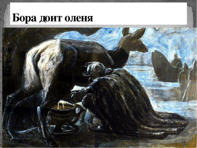 Бора доит оленя