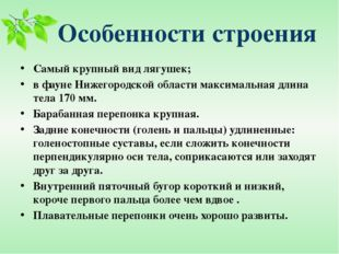 Особенности строения Самый крупный вид лягушек; в фауне Нижегородской области