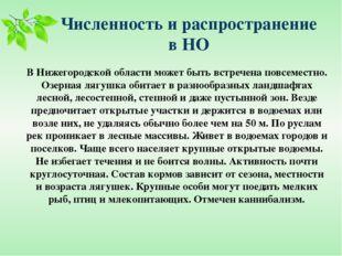 Численность и распространение в НО В Нижегородской области может быть встрече