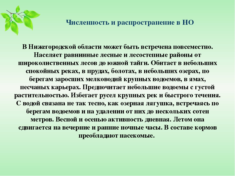 Численность и распространение в НО В Нижегородской области может быть встрече...