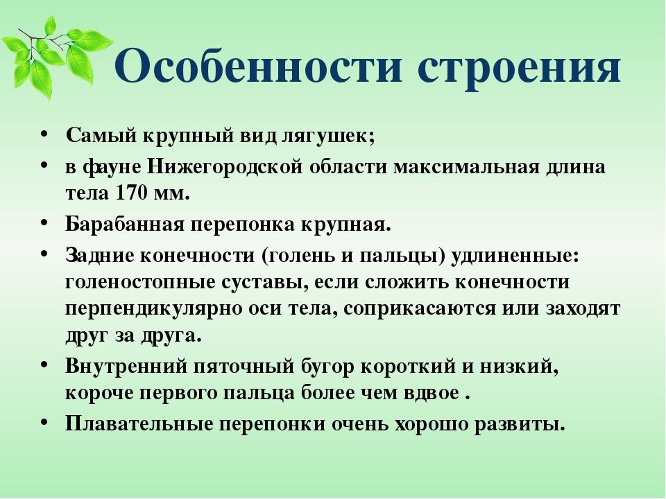 Особенности строения Самый крупный вид лягушек; в фауне Нижегородской области...