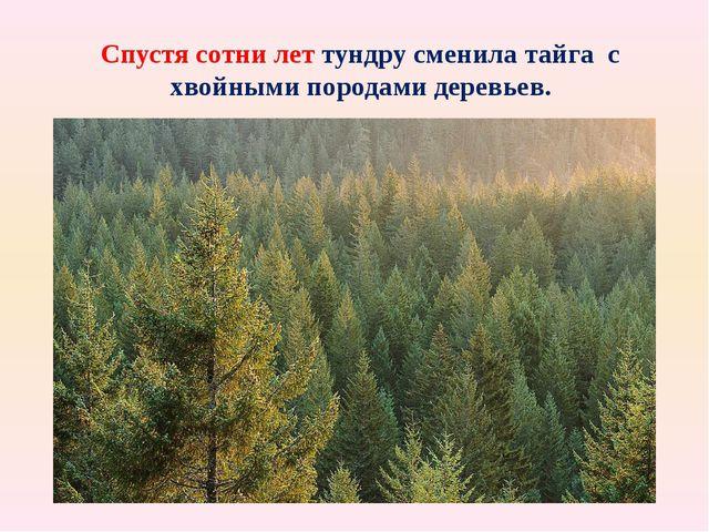 Спустя сотни лет тундру сменила тайга с хвойными породами деревьев. Фото