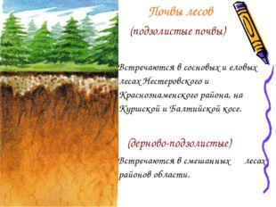 Почвы лесов (подзолистые почвы) Встречаются в сосновых и еловых лесах Нестер