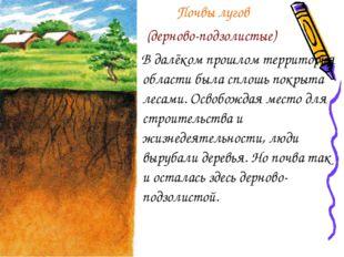 Почвы лугов (дерново-подзолистые) В далёком прошлом территория области была