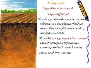Почвы полей (дерново-подзолистые) окультуренные Человек освобождал землю от