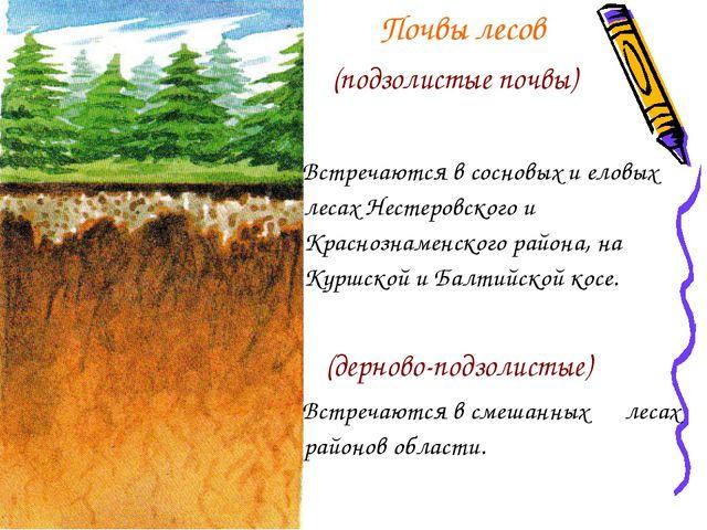 Почвы лесов (подзолистые почвы) Встречаются в сосновых и еловых лесах Нестер...