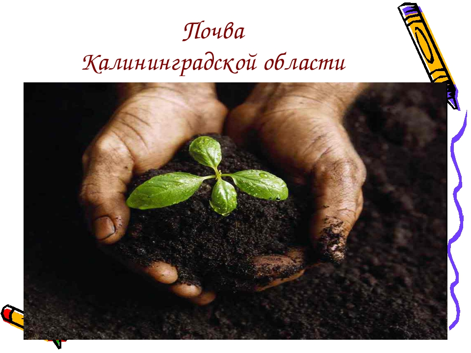 Почва Калининградской области