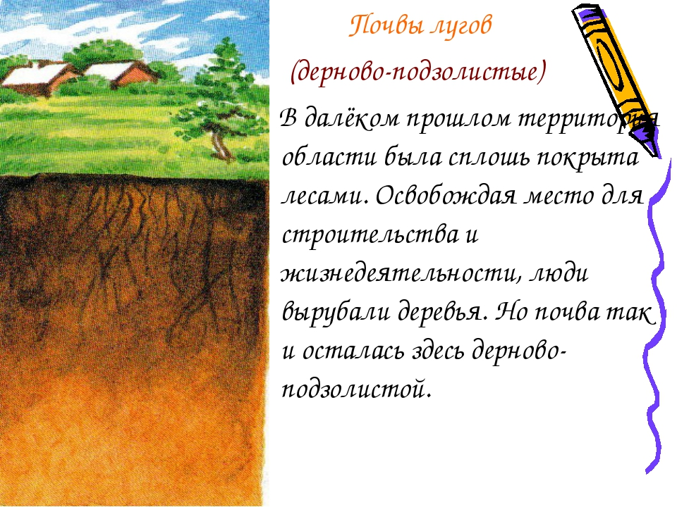 Почвы лугов (дерново-подзолистые) В далёком прошлом территория области была...