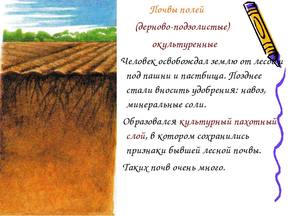Почвы полей (дерново-подзолистые) окультуренные Человек освобождал землю от...