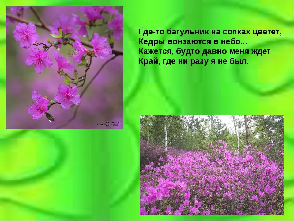Где-то багульник на сопках цветет, Кедры вонзаются в небо... Кажется, будто д...