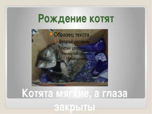 Котята мягкие, а глаза закрыты Рождение котят