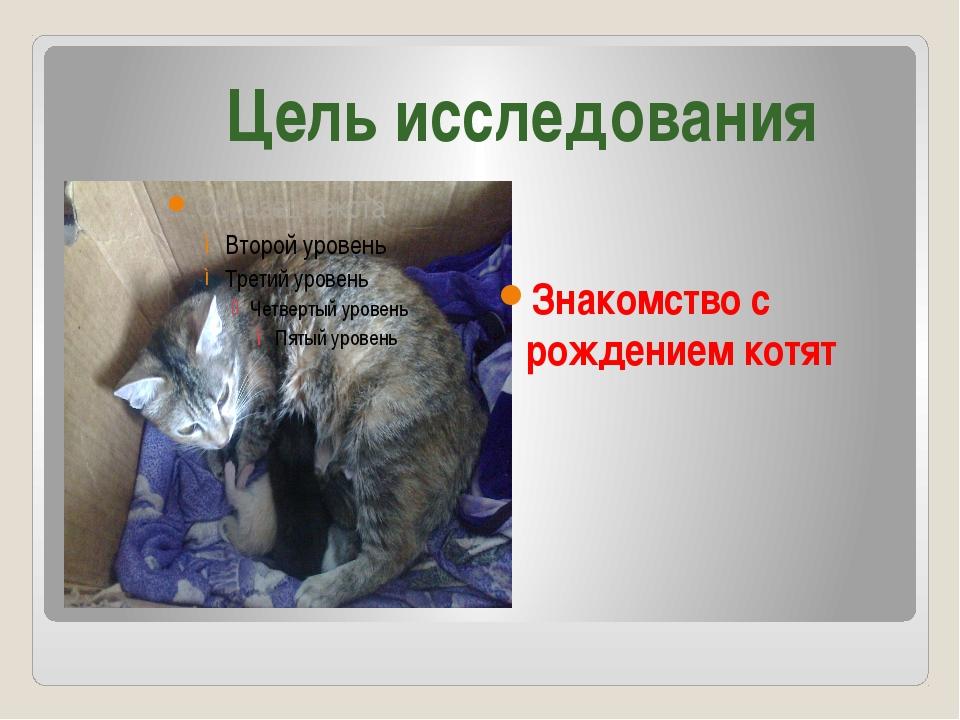 Знакомство с рождением котят Цель исследования