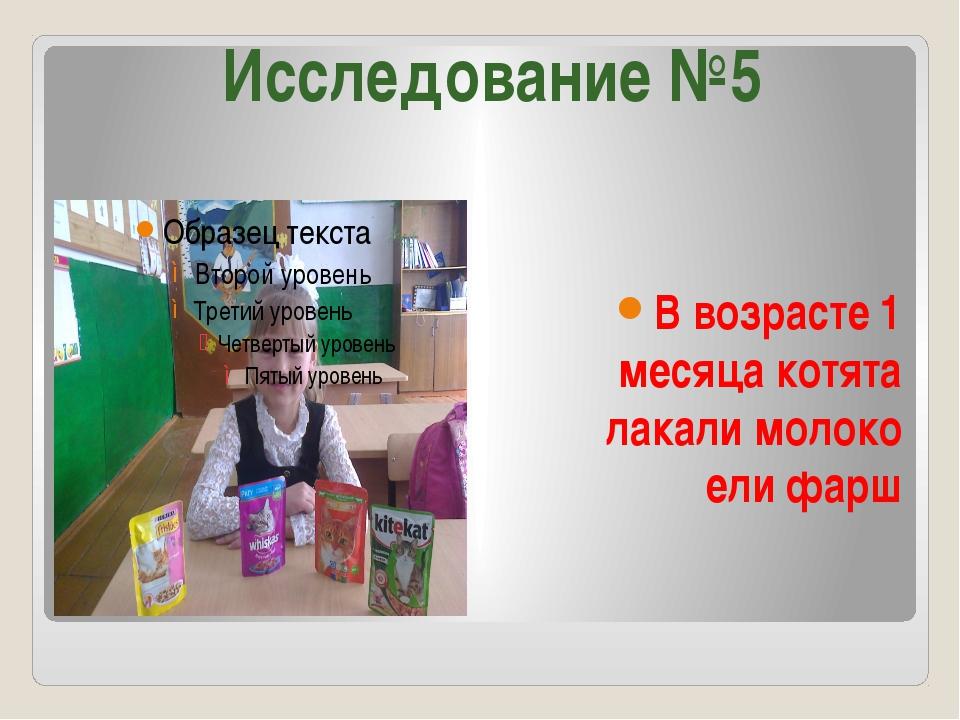 В возрасте 1 месяца котята лакали молоко ели фарш Исследование №5