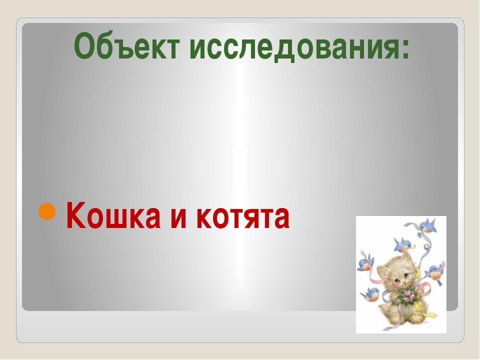 Кошка и котята Объект исследования: