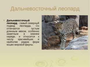 Дальневосточный леопард Дальневосточный леопард - самый северный подвид леоп
