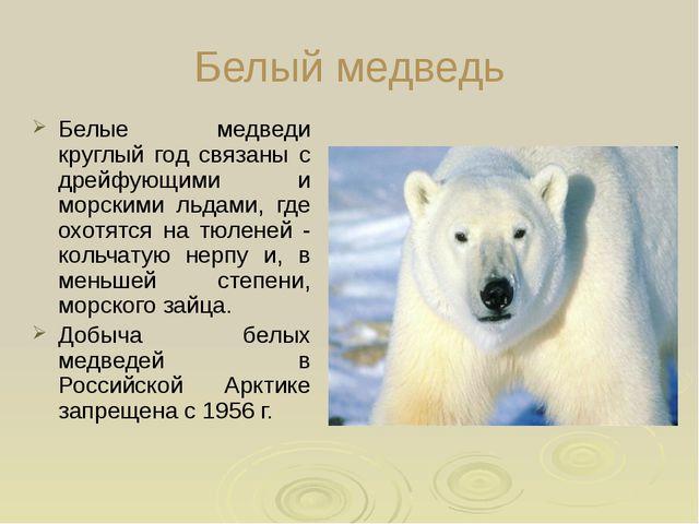 Белый медведь Белые медведи круглый год связаны с дрейфующими и морскими льд...