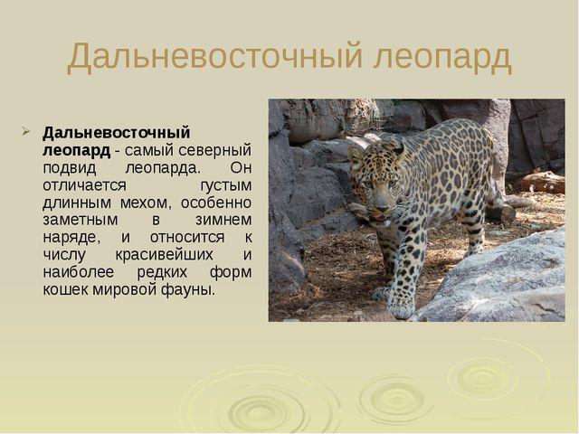 Дальневосточный леопард Дальневосточный леопард - самый северный подвид леоп...