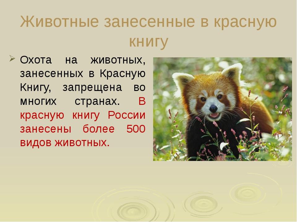 Животные занесенные в красную книгу Охота на животных, занесенных в Красную...