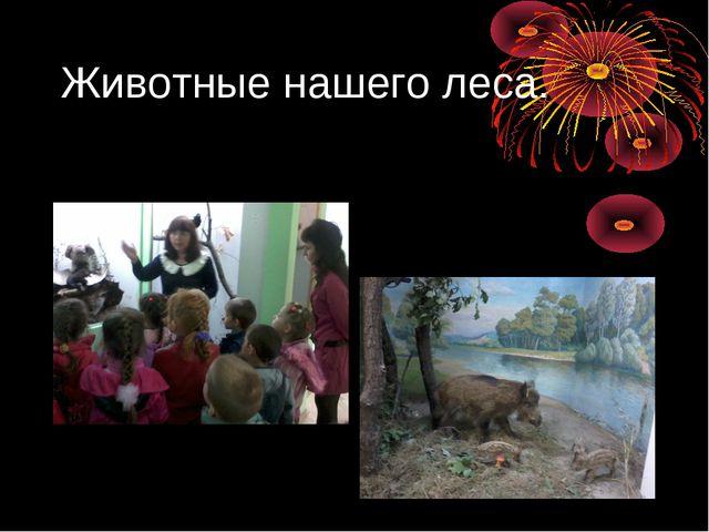 Животные нашего леса.