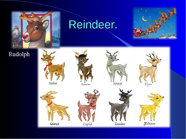 Reindeer. Rudolph