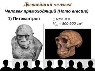 Древнейший человек 1 млн. л.н. Vгм = 800-900 см3 Человек прямоходящий (Homo e