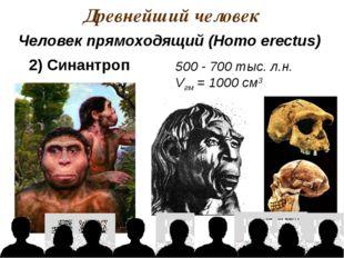 Древнейший человек 500 - 700 тыс. л.н. Vгм = 1000 см3 Человек прямоходящий (H