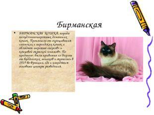 Бирманская БИРМАНСКАЯ КОШКА, порода полудлинношерстных домашних кошек. Произо