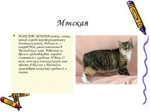 Мэнская МЭНСКАЯ КОШКА (манкс, мэнкс, manx), порода короткошерстных домашних к