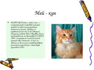 Мей - кун МЭЙН-КУН (англ. main-coon — американская енотовая кошка), порода по