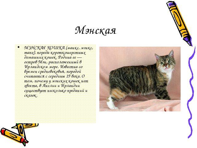 Мэнская МЭНСКАЯ КОШКА (манкс, мэнкс, manx), порода короткошерстных домашних к...