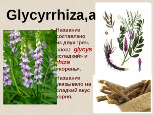 Glycyrrhiza,ae,f. Название составлено из двух греч. слов: glycys «сладкий» и