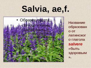 Salvia, ae,f. Название образовано от латинского глагола salvere «быть здоровы
