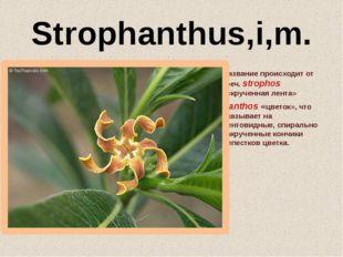 Strophanthus,i,m. Название происходит от греч. strophоs «скрученная лента» и