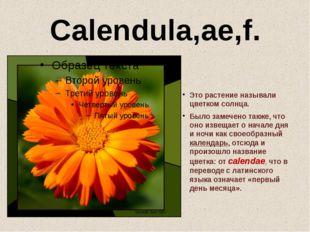 Calendula,ae,f. Это растение называли цветком солнца. Было замечено также, чт