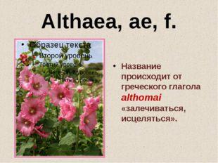 Althaea, ae, f. Название происходит от греческого глагола althomai «залечиват