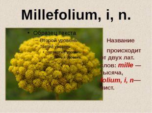 Millefolium, i, n. Название происходит от двух лат. слов: mille — тысяча, fol