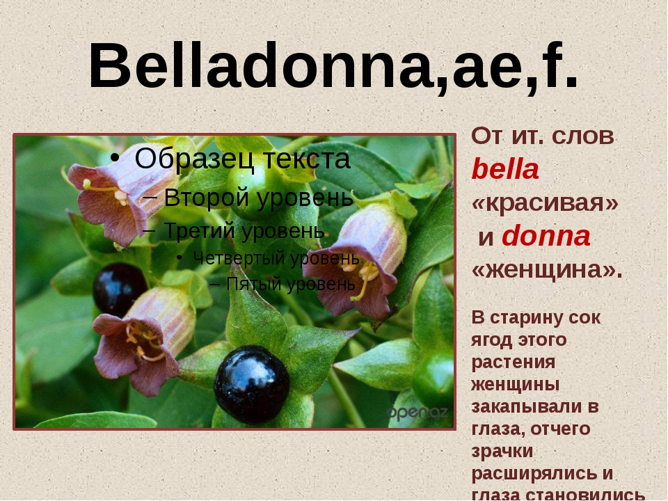 Belladonna,ae,f. От ит. слов bella «красивая» и donna «женщина». В старину со...
